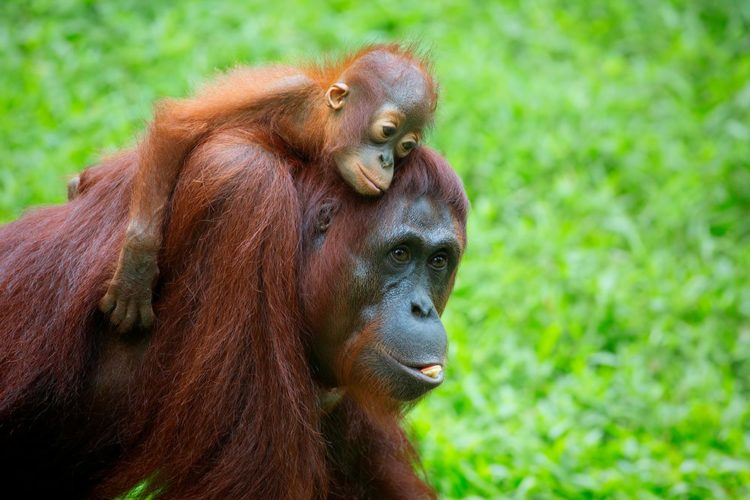Malaysia, Borneo & Singapore
